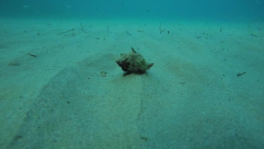 Header of mollusc