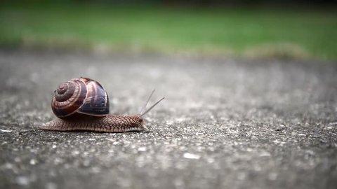 Snail is crossing the street.