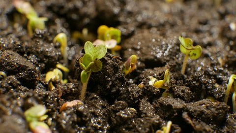 Growing Green Plants Agriculture Timelapse