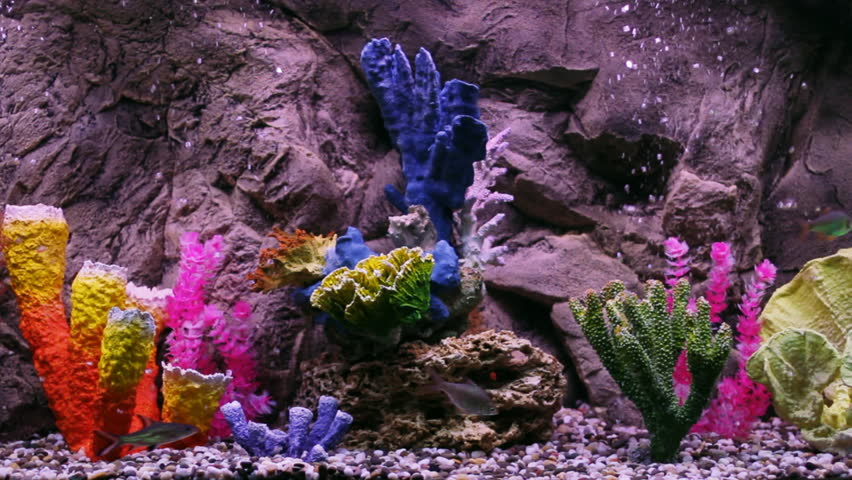 Very beautiful aquarium with fishes and corals.