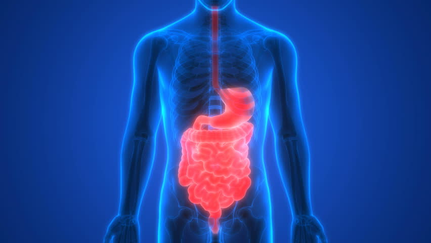 Digestive system animation stock footage video 27673240 shutterstock human digestive system anatomy 3d 4k stock video clip ccuart Image collections
