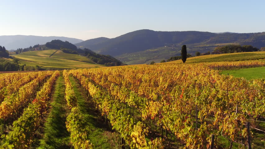 Vineyards, a suggestive aerial video over a vineyards in an amazing tuscan landscape, in a beautiful day