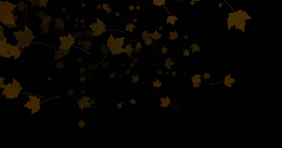 Yellow, brown, red colorful leaves autumn colors flying on black background,  leaf fall season concept | Shutterstock HD Video #21047353