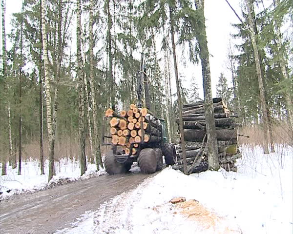 special tree trunk logs transporting tractor truck go on viscous dirty forest in spring. timber industry