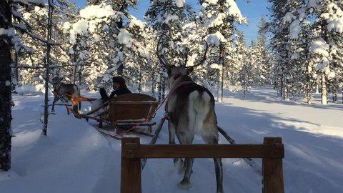 Reindeer Sleigh Ride.