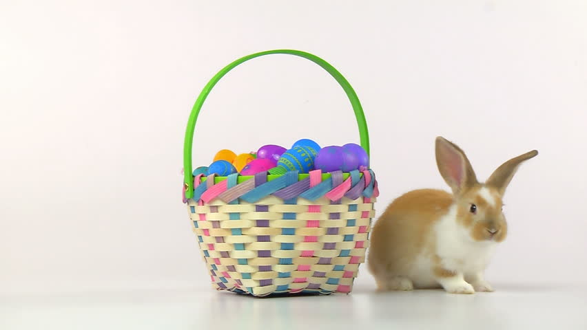 Easter Bunny in an Easter Basket