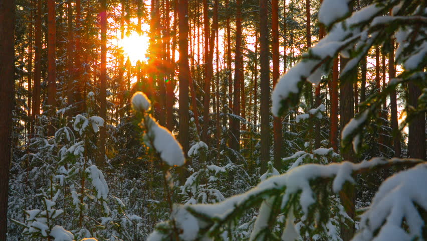 Sun in beautiful winter snowy forest | Shutterstock HD Video #21943303