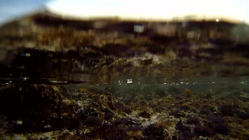 under water view of tide pool with waves breaking just below water surface. shows sea urchins, barnacles mussels and many other marine animals