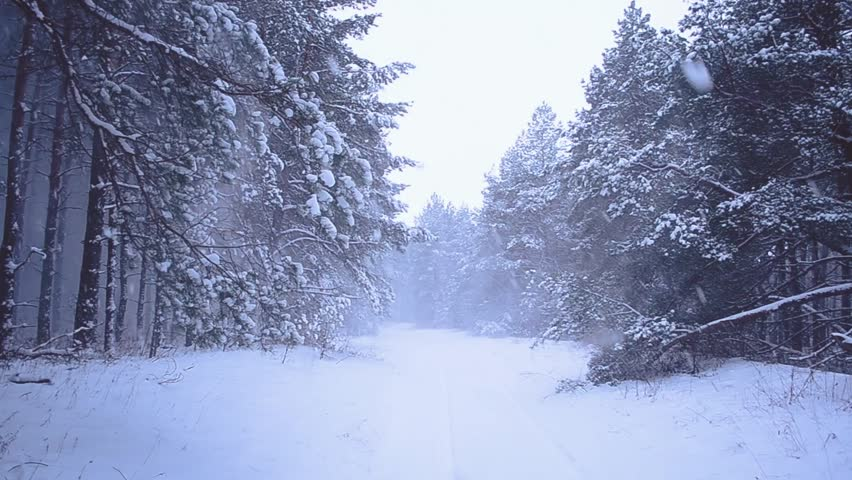 Background winter video in snowfall forest use for winter - Free screensavers snowflakes falling ...