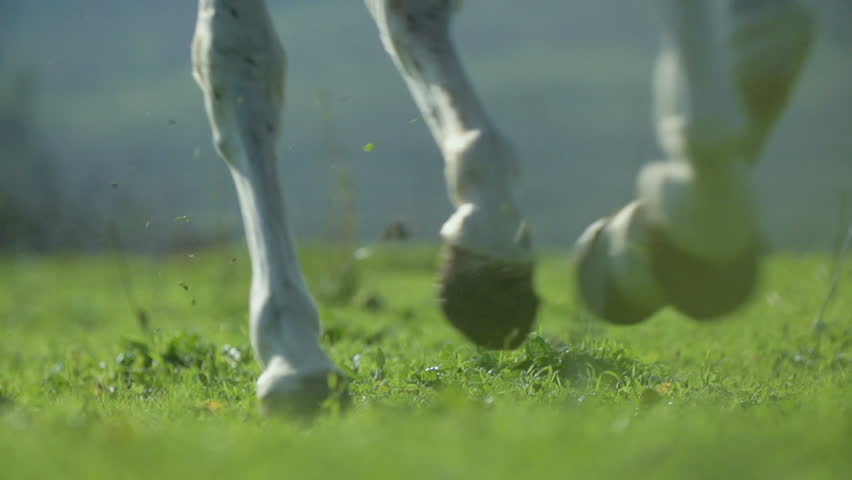 Close up on the hooves of a white horse running on the grass. Slow motion at 200 fps