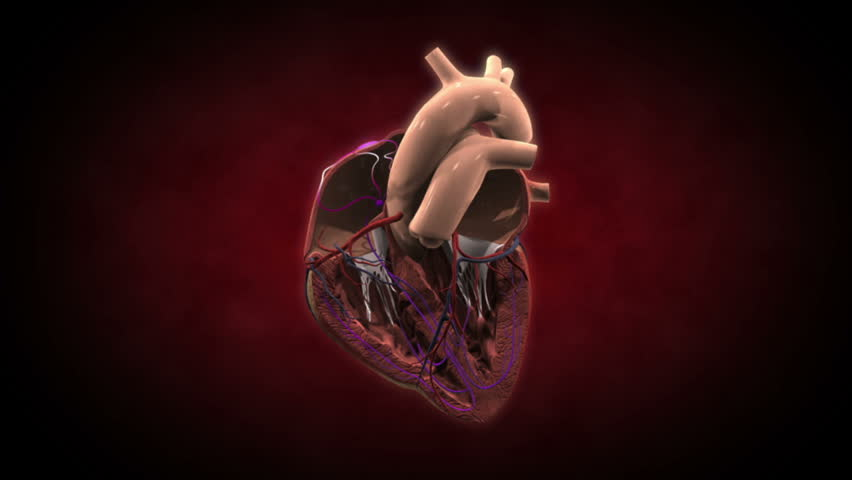 Inside a beating heart