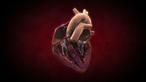 Inside a beating heart