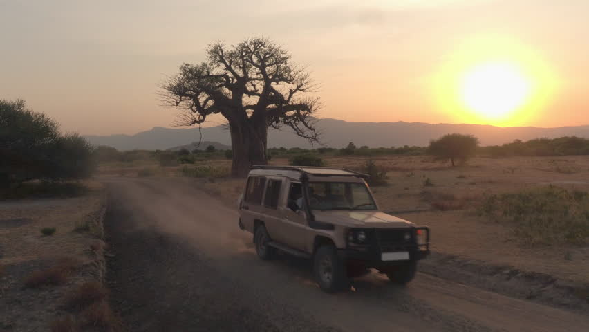 AERIAL, CLOSE UP: Flying towards game drive safari jeep vehicle driving tourists and guides past mighty old baobab tree in beautiful arid African savannah plain field at stunning golden sunset