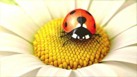 Daisy flower with a ladybird, beautiful 3d animation  (also see swinging flower version Clip ID 2290694)