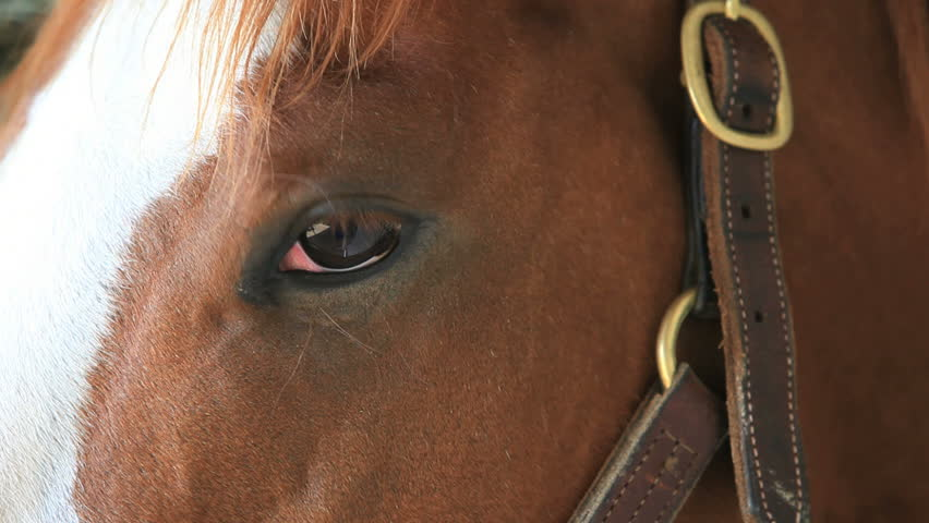 Horse eyes close up