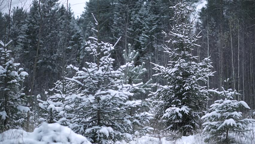 Snow in the Woods | Shutterstock HD Video #22764103