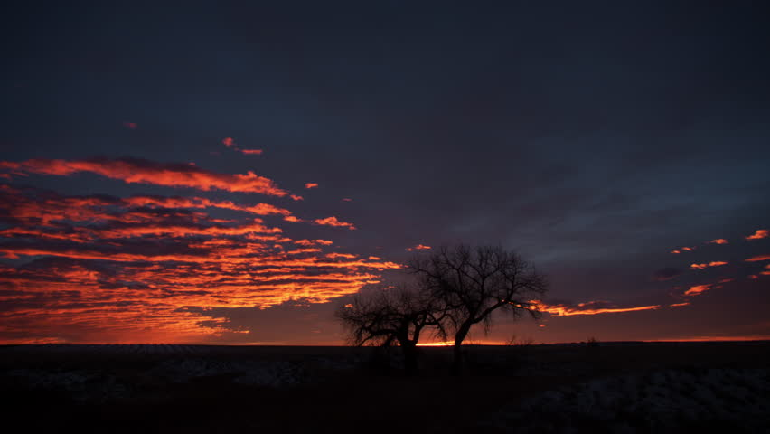 Brilliant Sunrise behind Cottonwood Trees on the prairie. 4K UHD Timelapse.