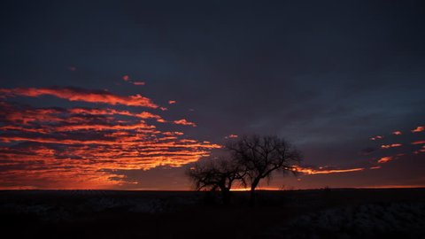 Brilliant Sunrise behind Cottonwood Trees on the prairie. 4K UHD Timelapse.