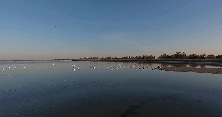 Aerial fantastic view Birds seagulls soar to sandbar on salt lake, morning landscape | Shutterstock HD Video #22877653