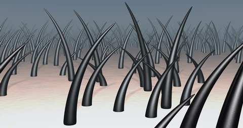 Hair on skin. 3d animation of camera flying into strands of hair