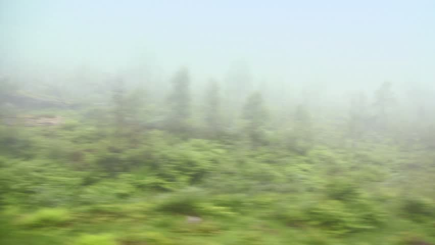 Forest with trees and grass in fog, shown in motion