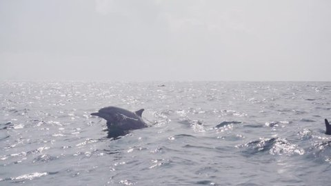Dolphins jumping and swimming in super slow motion (250 fps), ungraded, s-log