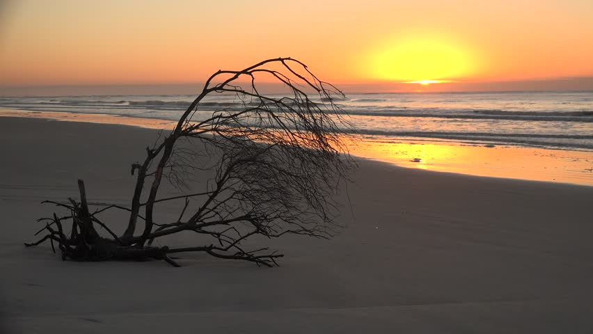 Calm after the storm. Pretty sunrise on deserted beach with a dead tree on the shore.  Following Hurricane Matthew. North Myrtle Beach, SC.