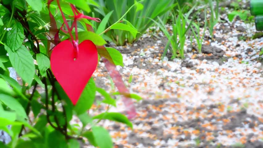 Red heart paper on green grass.Toning. Tilt-shift effect | Shutterstock HD Video #23613781