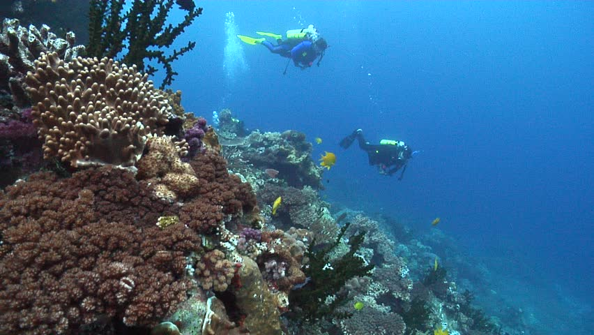 scuba diving in the waters near Fiji Islands coral reef