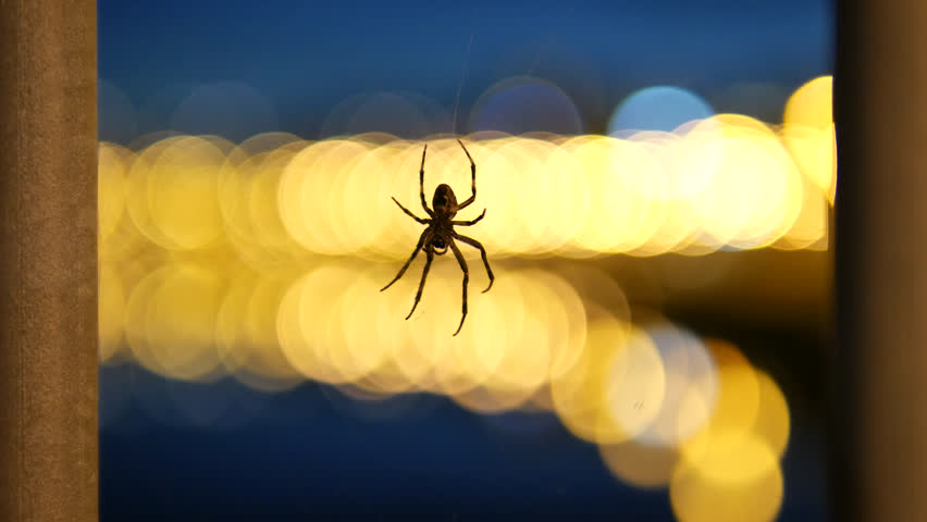 Spider hanging in web at night. Lights background