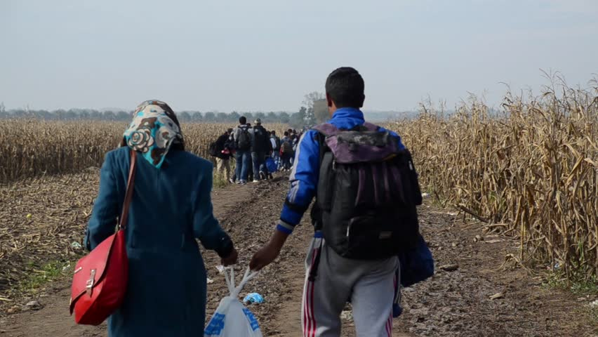 Refugees Running In Cornfield | Shutterstock HD Video #24043639