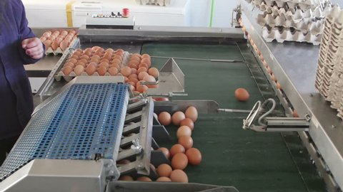 Eggs grading by weight and packaging production line at chicken farm