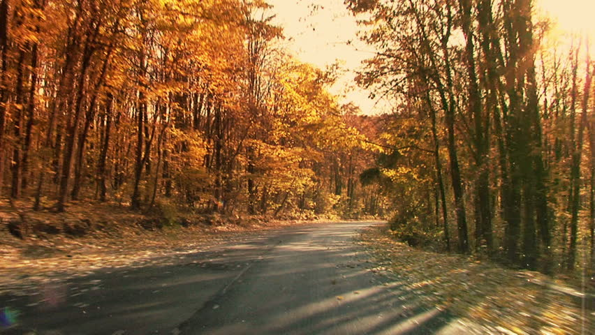 Fall in the forest. Steady footage shot from the car with grad sunset filter./Fall in motion