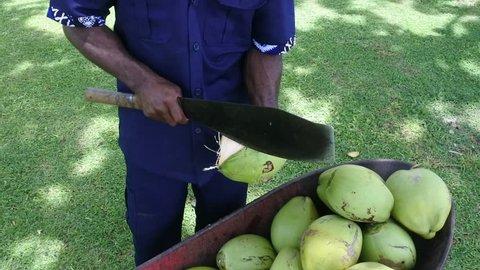 Indigenous Fijian man peels coconut with machete knife in Fiji. Real people, copy space