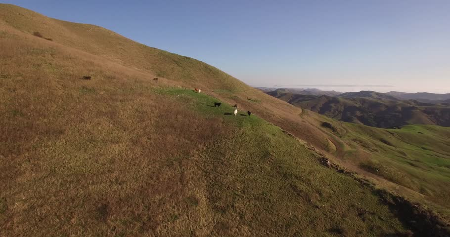 Orbit Cows on a hill, Aerial, 4K, 34s, 2of7, Cows, Farming, Ranching, farm, Reveal, Stock Video Sale - Drone Discoveries llc..mov | Shutterstock HD Video #24244883