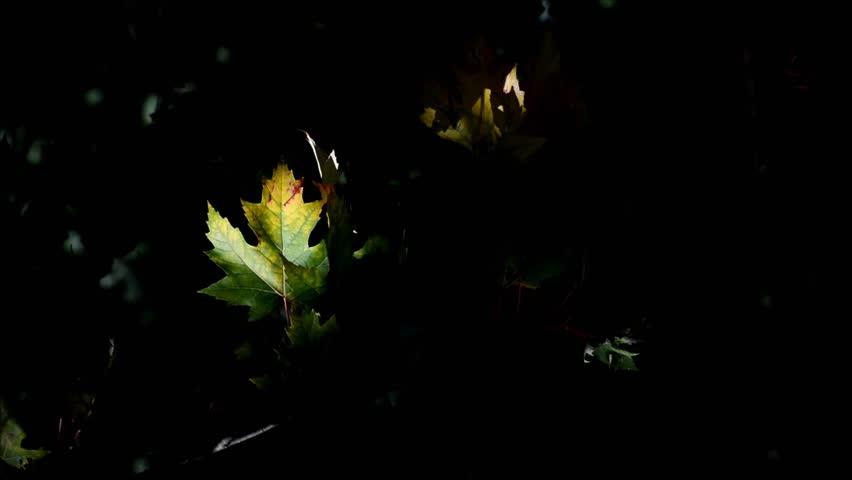 Autumn in Berlin Spandau, Germany | Shutterstock HD Video #24262373