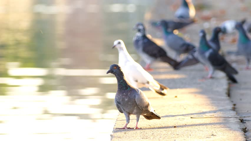 the bothersome beauty of pigeons thesis statement