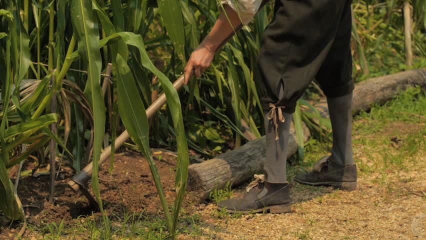 VIRGINIA - SPRING 2015 - Reenactment, Recreation. Colonial 17th century farmer, settler, working farm, in corn field, tilling the earth, farmstead.  Farm work, agricultural work in new world.  Farmer. | Shutterstock HD Video #24404183