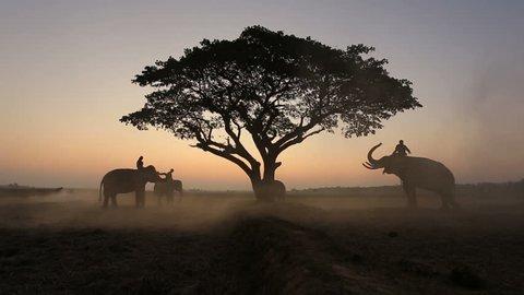 Outside safari Elephant silhouette at surin thailand