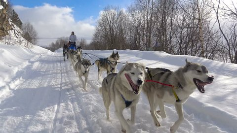 Racing sled dogs. The Caucasian mountains. Russia.
