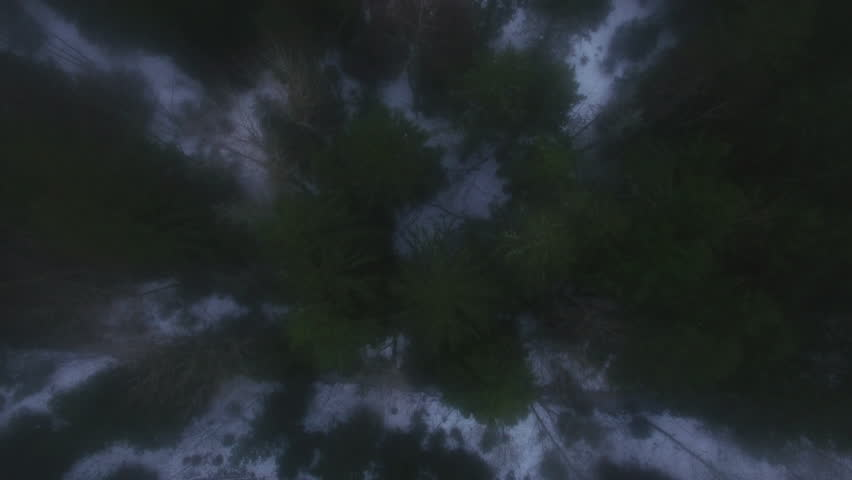 Aerial Shot of a Winter Forest. Snow Lying on the Ground and Fog is Visible. Shot on 4K (UHD) Camera. | Shutterstock HD Video #24794423