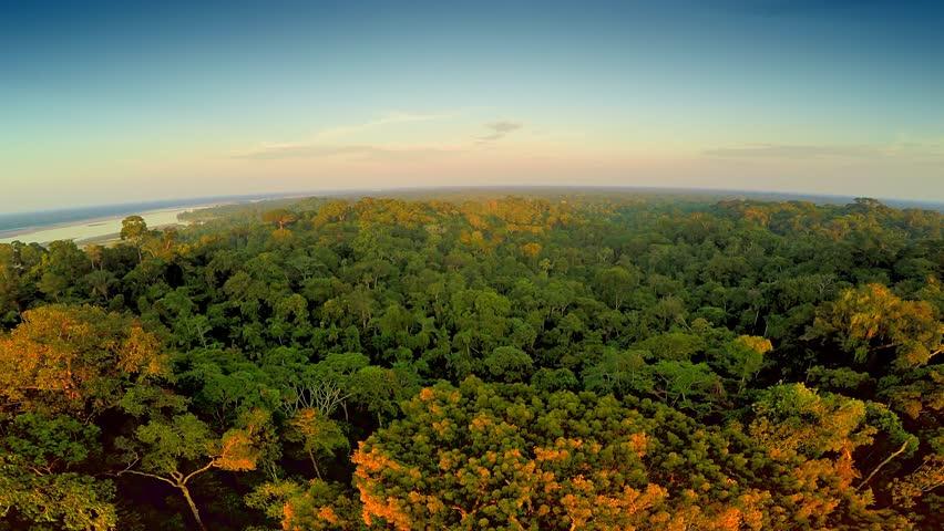 Aerial Shot Of Amazon Rainforest at Sunset | Shutterstock HD Video #25029140