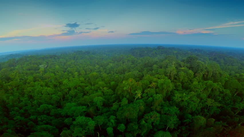 Aerial Shot Of Amazon Rainforest at Twilight | Shutterstock HD Video #25029143