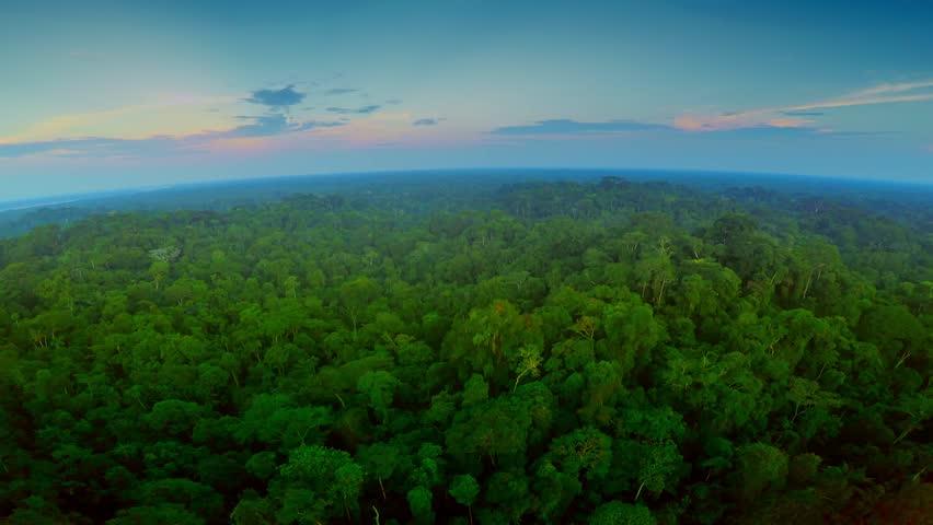 Aerial Shot Of Amazon Rainforest at Twilight