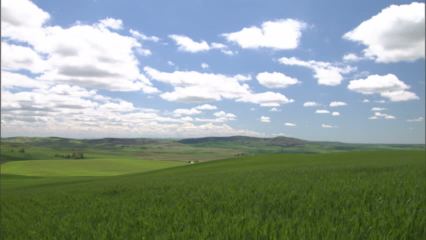 Wheat Field with Big Blue Sky - HD stock footage clip