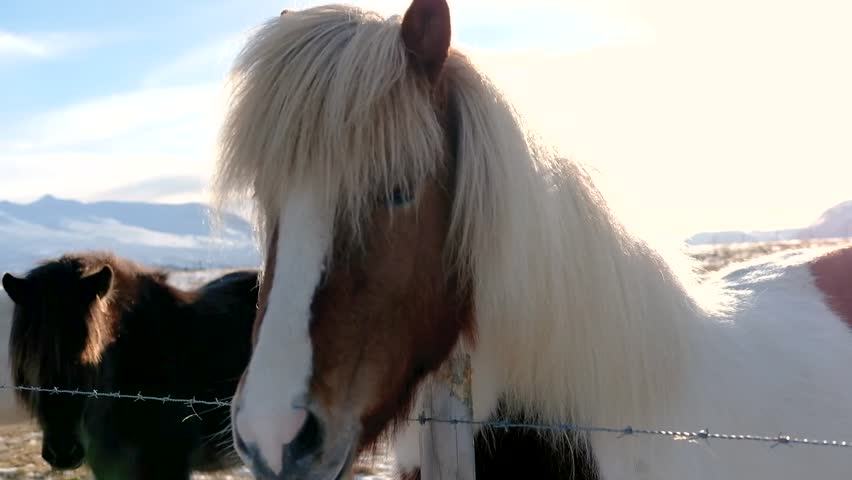 Beautiful horse, with bright light from behind, head shot   Shutterstock HD Video #25272353