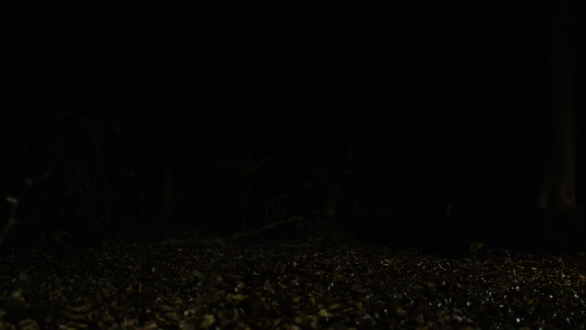 4K Endurance training group running in the woods at night   Shutterstock HD Video #25369283