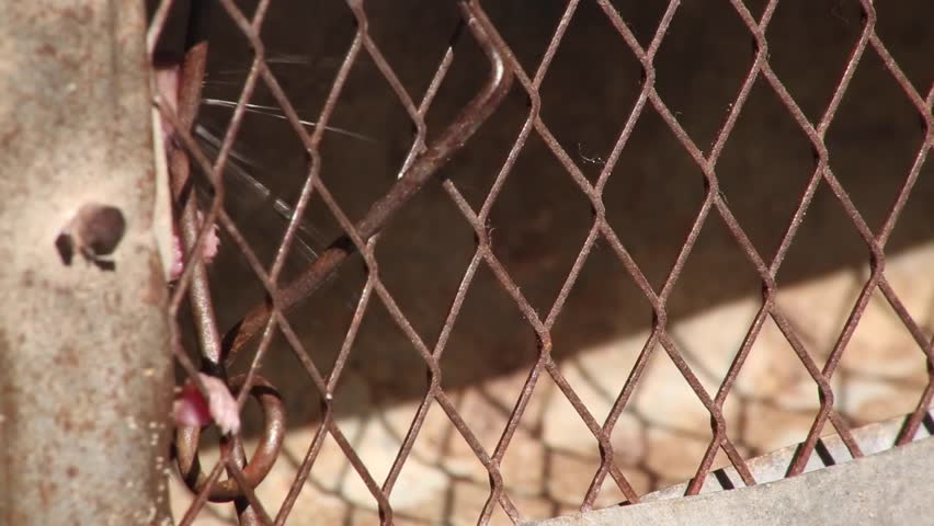 a mouse in the cage - HD stock footage clip