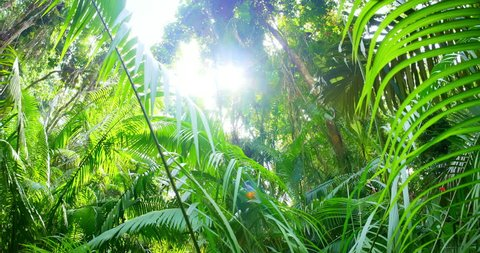 Beautiful nature of jungle forest. Green botany and fresh palm tree foliage under bright sun of tropical climate