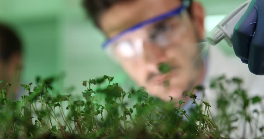 Macro Shot of Researcher Irrigate Plant Seedlings Agriculture Nursery Laboratory